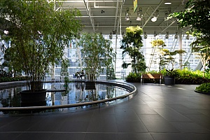 indoor pond in the middle of a building